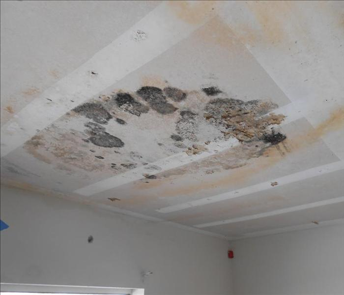 Mold In Apartment: SERVPRO Of Hacienda Heights