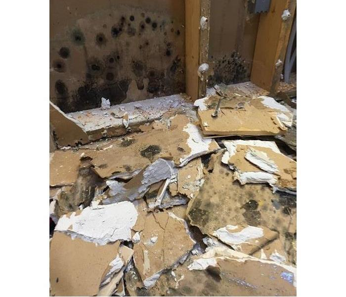 Extensive Mold Damage in Hemet, CA
