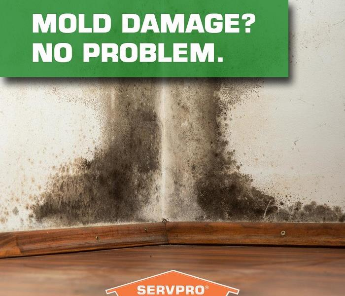 Mold Remediation Our SERVPRO team is trained to assess and then remediate your Mold Damage
